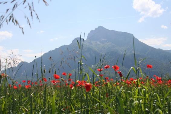 Anif near Salzburg