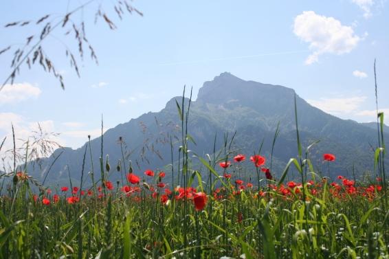 Anif bei Salzburg