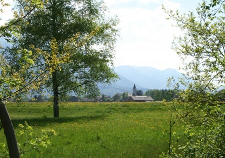 Salzburg-Leopoldskron/Moos